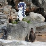 [Japonia] Żałoba po śmierci zakochanego pingwina