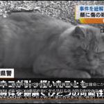 [Japonia] Kot podejrzany o morderstwo w Kumamoto
