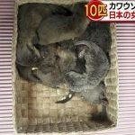 [Japonia] Przemyt wydr udaremniony