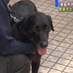 [Japonia] Pies znajduje nielegalną broń