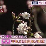 [Japonia] Sezon Kwitnących Wiśni w Tokyo rozpoczęty
